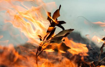 Close of burning leaf