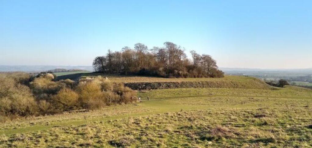 trees on a hill ith sunny sky